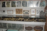 Paleontology and Physiographical Museum